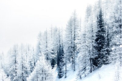 Sticker Snow covered forest