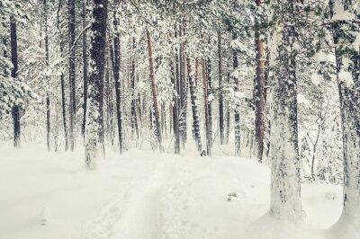 Sticker Snowfall in winter forest.
