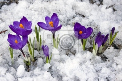 Sticker Spring