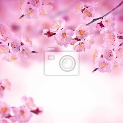 Spring background with pink blossom