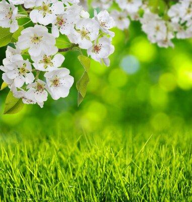 Sticker Spring blossom and grass