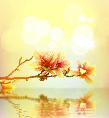 Sticker Spring flower magnolia background