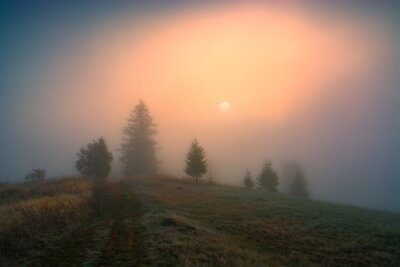 Spring foggy image