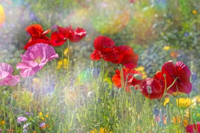 Sticker spring meadow with red poppies