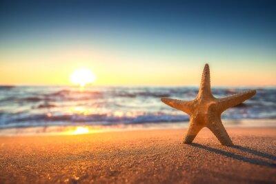 Sticker Starfish on the beach at sunrise