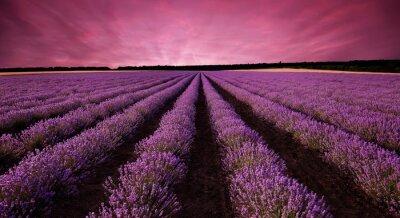 Sticker Stunning lavender field landscape at sunset