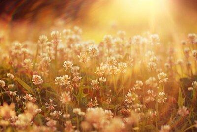 Sticker summer landscape background sun flowers Rays