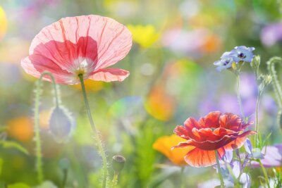 Sticker summer meadow with red poppies