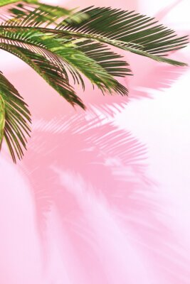 Sticker Summer tropical pastel background with palm