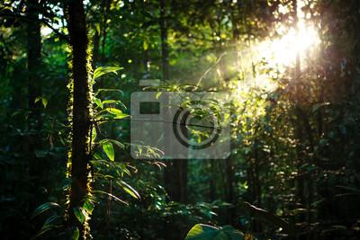 Sticker Sun rays deep in the rain forest