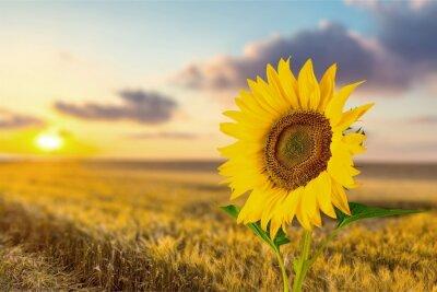 Sticker Sunflower.