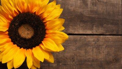 Sticker Sunflower on wood