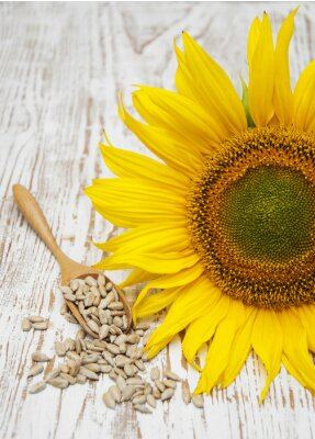Sticker Sunflower with Seeds