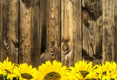 Sticker Sunflowers on old wooden boards. Flowers background with copy space