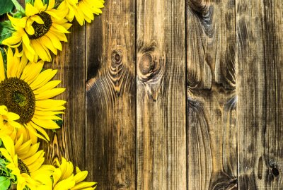 Sticker Sunflowers on rustic wood background. Flowers backgrounds with copy-space