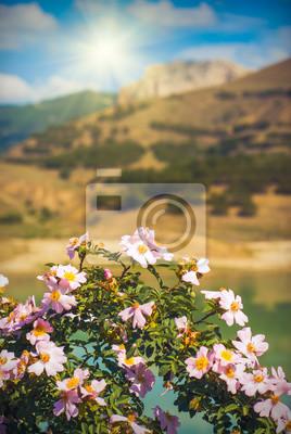 Tea rose valley_1