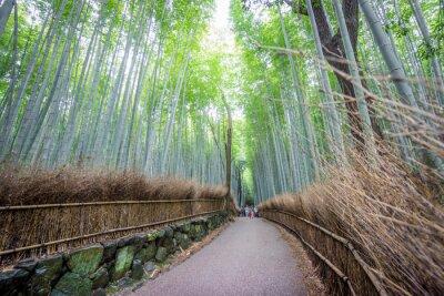 Sticker The Arashiyama Bamboo Grove of Kyoto, Japan.