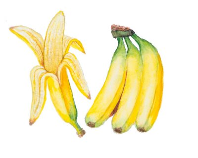 Sticker the banana watercolor isolated on the white background