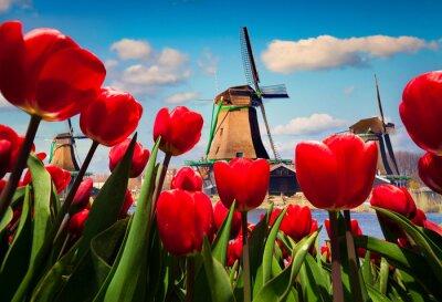 Sticker The famous Dutch windmills