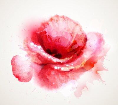 Sticker The flowering red poppy