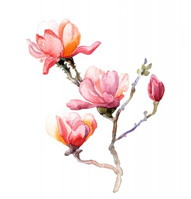 Sticker the magnolia watercolor isolated on the white background