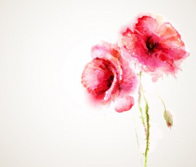 Sticker The two flowering red poppies. Greeting-card.