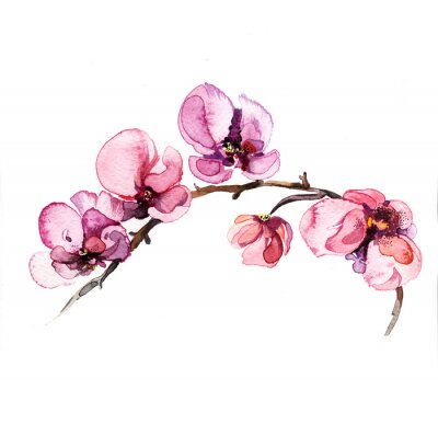 Sticker the watercolor flowers orchid isolated on the white background