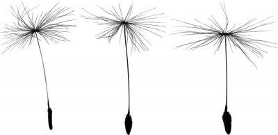 Sticker three black dandelion seeds silhouette isolated on white