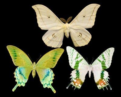 Sticker three butterflies isolated on black