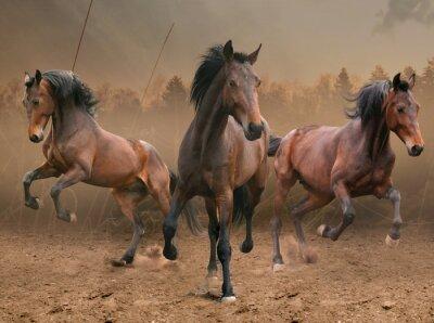 Sticker three horses