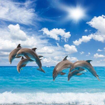 Sticker three  jumping dolphins