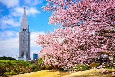 Sticker Tokyo, Japan at Shinjuku Gyoen Park in the Spring