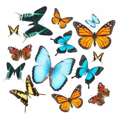 Sticker Tropical butterflies set