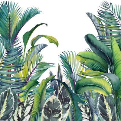 Sticker Tropical card with palm trees, banana and calathea leaves. Watercolor illustration on white background.