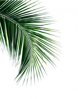Sticker tropical coconut palm leaf isolated on white background