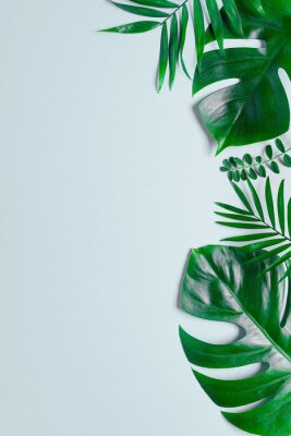Sticker Tropical green leaves palm fronds isolated on white background. the apartment lay, top view
