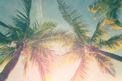 Sticker Tropical landscape with palm trees and sunny sky