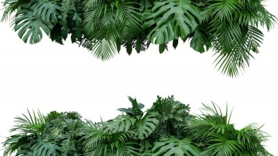 Sticker Tropical leaves foliage plant bush floral arrangement nature backdrop isolated on white background, clipping path included.