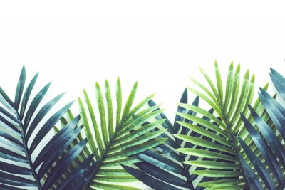 Sticker Tropical leaves foliage plant close up with white copy space background.Nature and summer concepts ideas