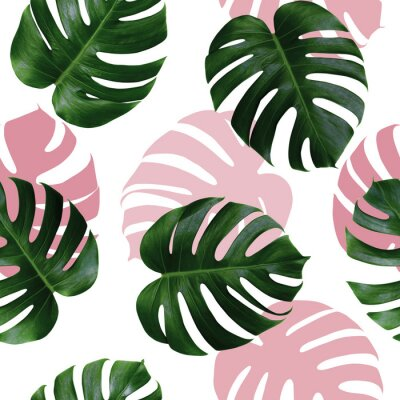 Sticker Tropical leaves monstera,green leaf with pink shadow on white background.Monstera seamless pattern colorful illustration pink leaf,tree tropical exotic leaf for wallpaper textile vintage Hawaii style