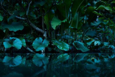 Sticker tropical rain forest with water mirror