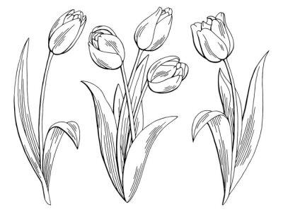 Sticker Tulip flower graphic black white isolated sketch illustration vector
