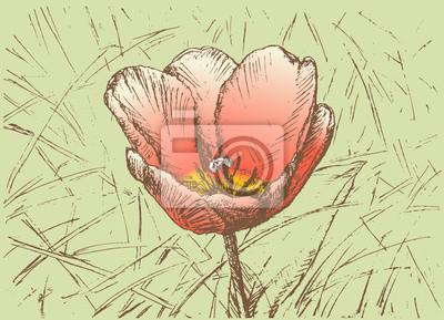 Sticker tulip in the grass