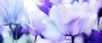 Sticker tulips cyan violet ultra light