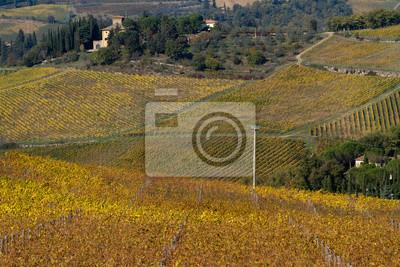 tuscany landscape of the vineyard in fall season
