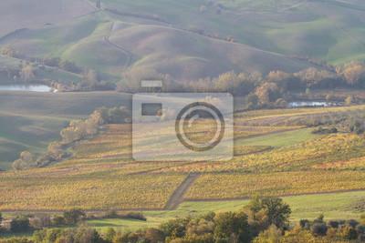 tuscany landscape of vineyard