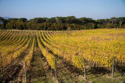 tuscany vineyard during the fall season