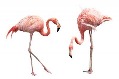 Sticker Two flamingo