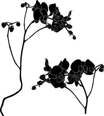 Sticker two orchid branches sketches on white