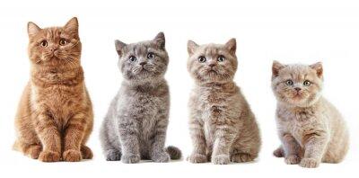 Sticker various british kittens
